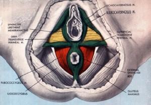 noanatomia1